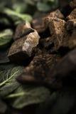 Шоколад с мятой Стоковое Изображение RF