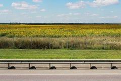 Шоссе бежит параллель к полю солнцецвета в пасмурном летнем дне стоковые изображения rf