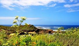 Шоссе Тихоокеанского побережья в Калифорнии Стоковая Фотография