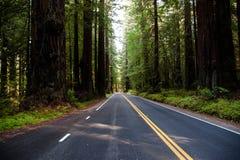 Шоссе Redwood Стоковые Фотографии RF
