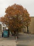 Шотландия осенью стоковая фотография rf