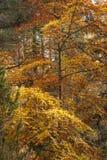 Шотландская листва осени стоковые фотографии rf