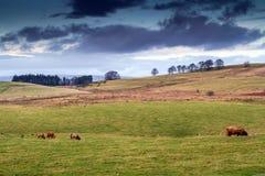 Шотландский ландшафт в осени Стоковые Фото