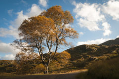 Шотландия Lochaber Октябрь 2104 Стоковые Фотографии RF