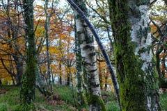 Шотландская гористая местность Forrest Стоковые Фото