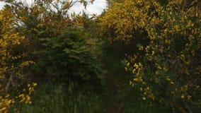 Шотландская съемка тележки веника сток-видео