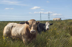 Шотландская ферма Стоковые Фотографии RF