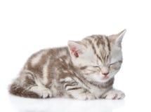 Шотландский спать котенка белизна изолированная предпосылкой Стоковое Фото