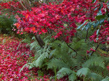 Шотландский цвет сада осени Стоковое фото RF