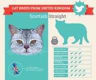 Шотландское прямое infographics породы кота иллюстрация вектора