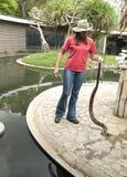Шоу гада показывая змейку constrictor горжетки стоковое изображение