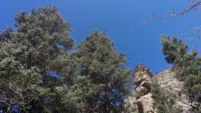 Шпиль и деревья стоковые фотографии rf