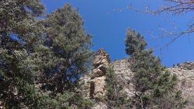 Шпиль и деревья стоковая фотография rf