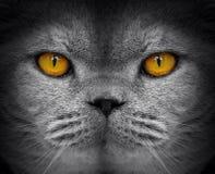 Шпионить шпионки глаз кота наблюдения стоковая фотография