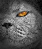 Шпионя взгляд середины глаз котов наблюдения стоковые фотографии rf