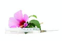 шприц цветка розовый стоковая фотография rf