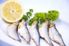 шпротина рыб Стоковое фото RF