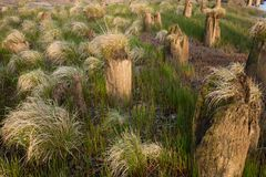 Штабелевки комка травы и деревянных Стоковое Изображение