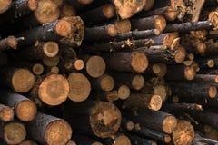 штабелированы журналы, деревянное зерно Стоковые Изображения RF
