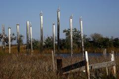 Штабелевки в болоте Стоковое Изображение