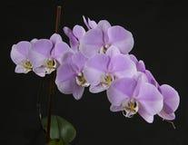 Штабелированная орхидея Стоковое фото RF