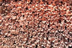 Штабелированная предпосылка отрезка древесины Стоковые Фото