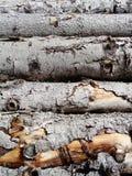 Штабелированная текстура журнала дерева отрезка Стоковая Фотография