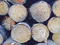 Штабелированная текстура журнала дерева отрезка Стоковые Изображения