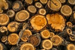Штабелированные журналы древесины Стоковые Фото