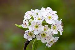 Штабелированные цветки макроса Стоковая Фотография