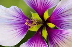 Штабелированные цветки макроса Стоковое Фото
