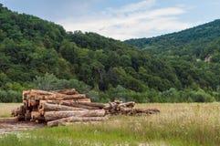 Штабелированный ствол дерева в горе Стоковые Изображения RF