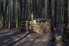 Штабелированный для древесины засыхания Стоковое Изображение