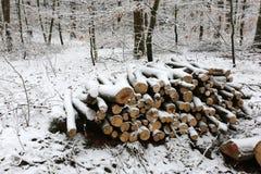 Штабелированный для древесины засыхания Стоковая Фотография RF