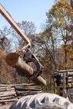 Штабелировать журналы дерева на лесопилке Стоковые Фотографии RF