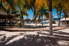 Штанга пляжа с гамаками и пальмами стоковое изображение