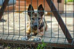 штанги за собакой Стоковые Изображения RF