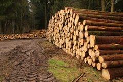 Штапель древесины стоковое фото