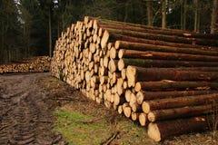 Штапель древесины стоковые фотографии rf