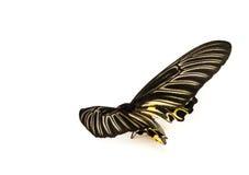 Штат Butterflys Стоковые Фотографии RF