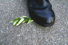 штемпель ветви ботинка прованский Стоковые Изображения