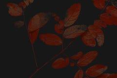 штемпель ветви Стоковые Фотографии RF