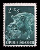 Штемпель напечатанный в Австрии показывает дикого кабана, Sus Scrofa, одичалой свиньи Стоковое Изображение