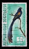Штемпель напечатанный в Того показывает progne Diatropura, экзотические птиц Стоковые Фотографии RF