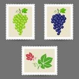 Штемпеля почтового сбора вектора с значками пука виноградины иллюстрация штока