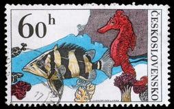 Штемпель напечатанный в Чехословакии, выставках Datrioides Microlepis и лошади моря Стоковое Фото