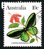 Штемпель почтового сбора бабочки Birdwing пирамид из камней австралийский Стоковое Фото