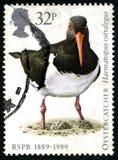 Штемпель почтового сбора Великобритании Oystercatcher Стоковое Фото