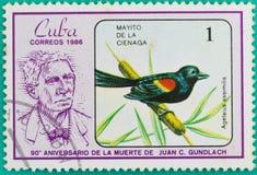 Штемпеля почтового сбора были напечатаны в Кубе Стоковые Фотографии RF