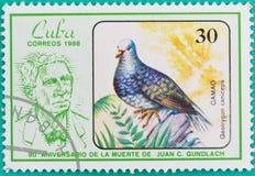Штемпеля почтового сбора были напечатаны в Кубе Стоковые Изображения
